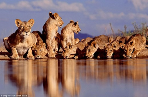 Animals drinking in water holes