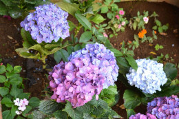Colorful flowers surrounding the church
