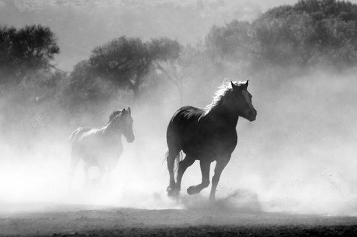 Horses are quick and agile, with a highly developed sense of balance.  They were first domesticated by humans in 4000 BC and were a regular form of transport up until the 20th century.  They can gallop at speeds of up to 43.97 mph.