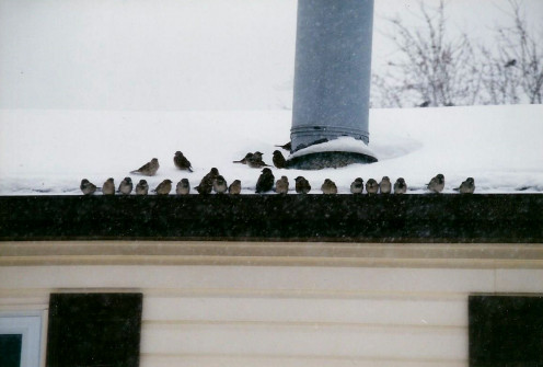 Wild birds have gathered to watch others at the feeders.