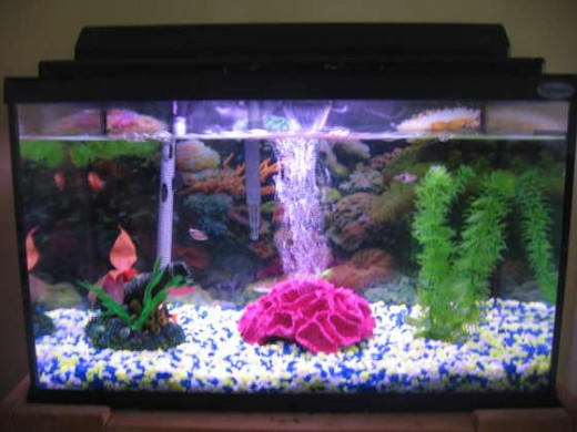 fish tank filter. A ten gallon fish tank