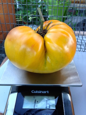 Gold Medal tomato seed has sold in this country for 2 centuries.