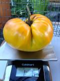 Best Home Garden Tomato: Gold Medal
