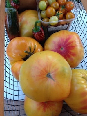 Gorgeous Gold Medal tomatoes are solid and sweet, good for fresh eating or canning.