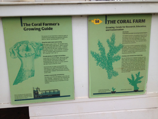 The Coral Farm's growing guide and information.