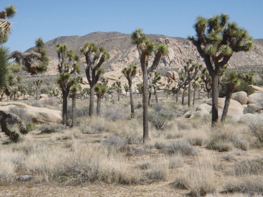 Hidden Valley/Joshua Tree National Park.
