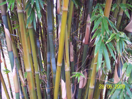 Bamboo can be used as a separator, or decorative addition to a bare wall.