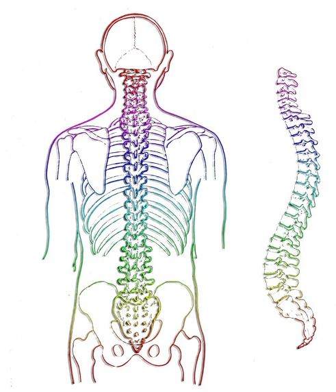 Laminotomy and Laminectomy are surgeries performed on the spine