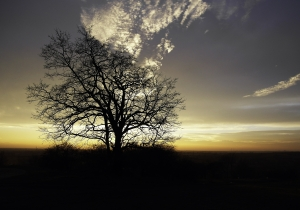 The sun comes up behind the lonely tree