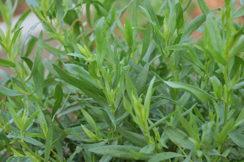 Fresh tarragon is delicious in a range of dishes and can be used to boost self-confidence.