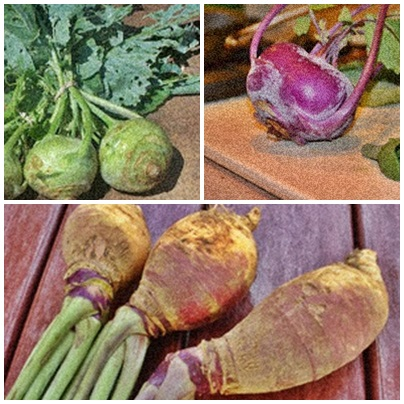 Kohlrabi (top photos) and Rutabagas (below).