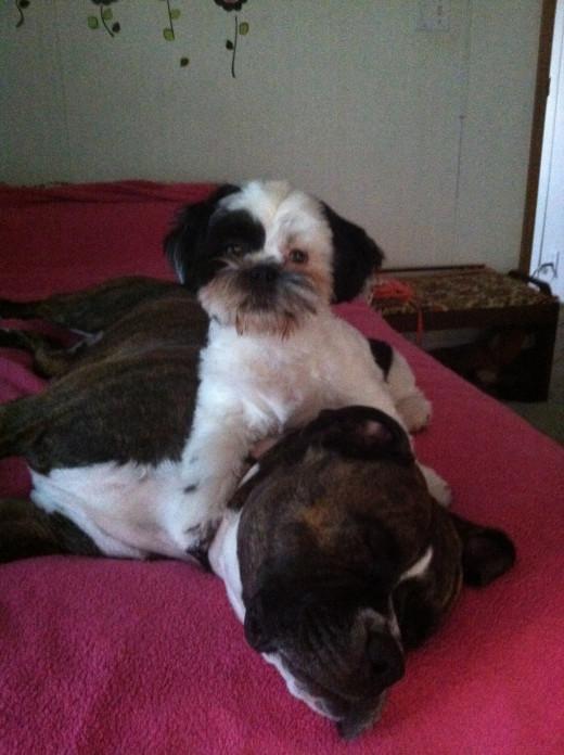 My Babies Louie and Daisy