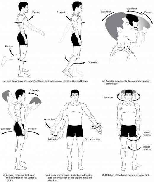 Different anatomical terms of motion and body movements.