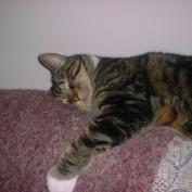 Aliycat profile image