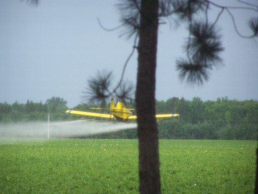 Plane Spraying The Field Across From My House.