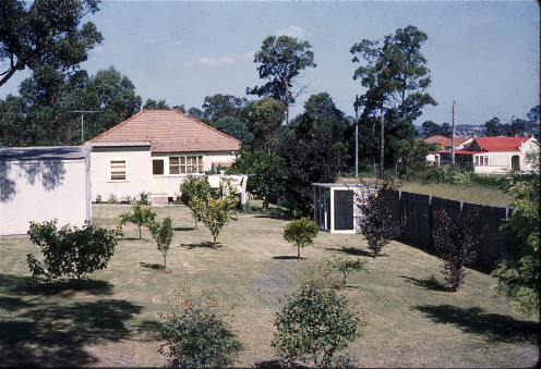 Our neat as a pin backyard in 1959. You can see the room added onto the back of the house. Hard to believe all this yard, house and trees are gone for an open-cut  Motorway 20m/60ft below.