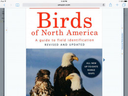 A great resource as well as field guides to identifying all birds - both large and small is the Birds To North America field guide.  Birding field guides are a must for any serious birdwatcher.  No matter what season you're watching the birds in!