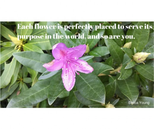 Each flower is perfectly placed to serve its purpose in the world, and so are you.