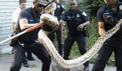 Cops removing a snake from a resident's home