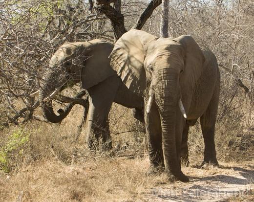 Help save the Big 5 from extinction. Photo: Matt Feierabend.