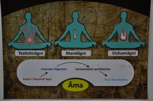 Ayurveda Theory