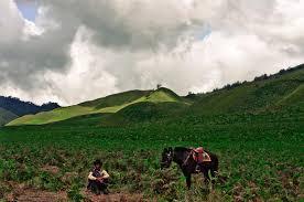 Horse  at Savana Hill
