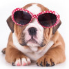 fancy puppy store profile image