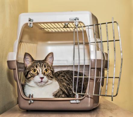 Choosing a Cat Carrier