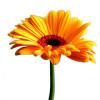 khanhha profile image