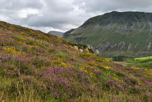 Gorse, heather and bracken