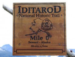 Will you be watching the historic Iditarod Race?