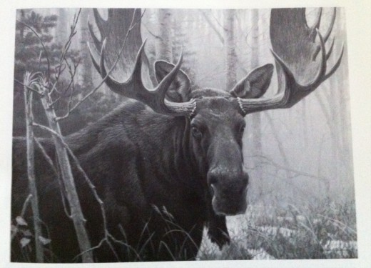 Photos taken from a book of Painting by Robert Bateman called Portraits of Nature