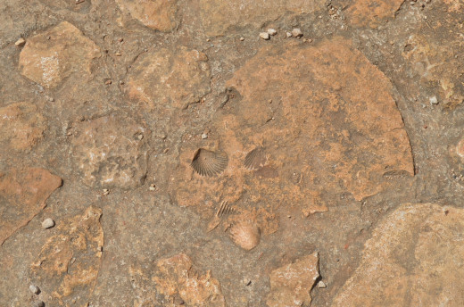 interesting fossils in the steps of Ek Balam