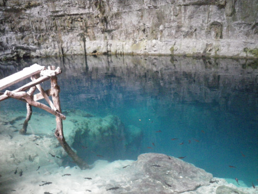 Water in the cenote. The water is cold and extremely clear by the deepest area.