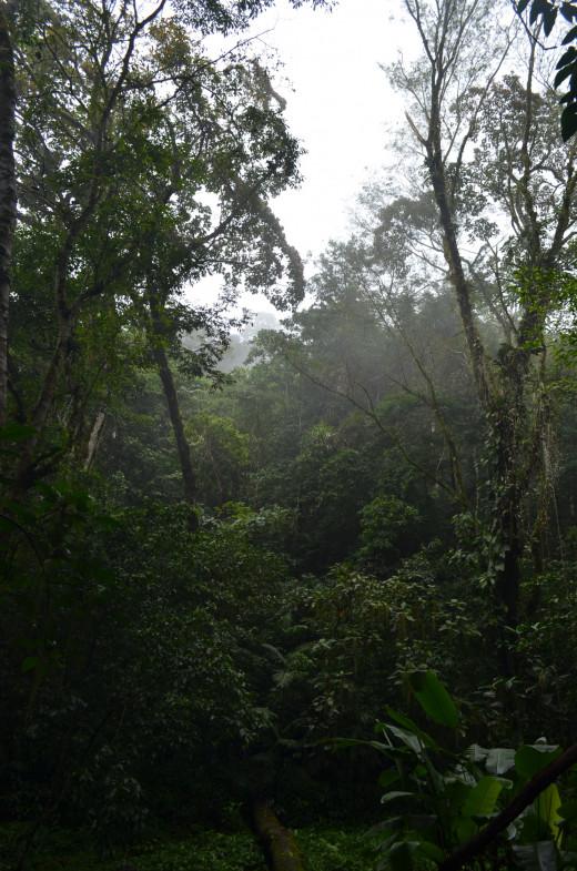 A view into the jungle