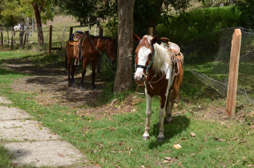 You can rent horses to ride to the site but the walk is really not that far.