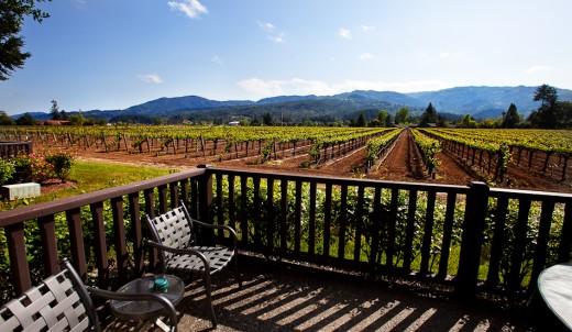 Vineyard view from Harvest Inn, St. Helena