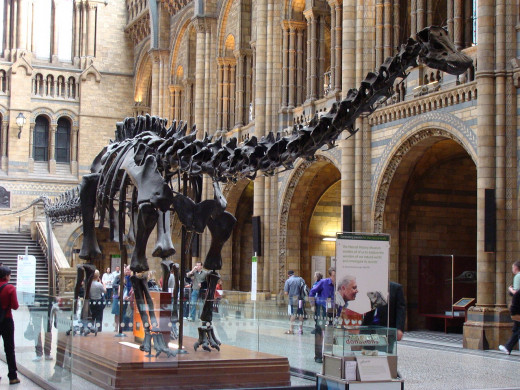 Skeleton of the giant Diplodocus in the central hall of the Natural History Museum.