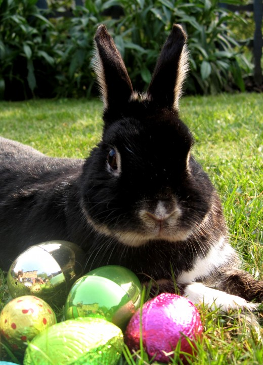 The modern Easter Bunny is a distant reference to Eostre's old rabbit sidekick.