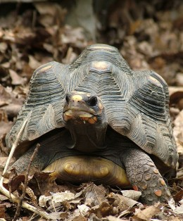 The Unimpressed Turtle is unimpressed with your unimpressive keyword selections.