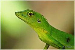 Reptiles: Disease Safety