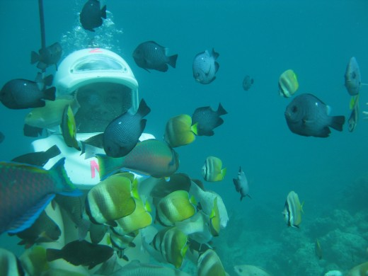 Experience a journey under the sea through helmet diving