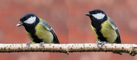 The bird on the left has a seed in its beak while the one on the right has the seed between its claws