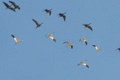 Why and How do Birds Migrate?