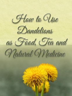 How to Use Dandelions as Food, Tea and Natural Medicine