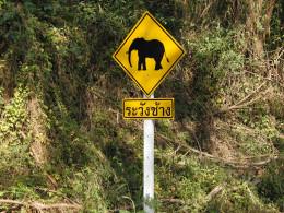 The dreaded elephant crossing.