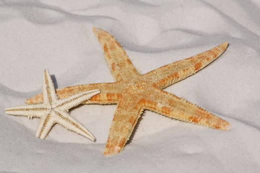 Photo of two Starfishes on a white sandy beach  - Every Starfish Counts
