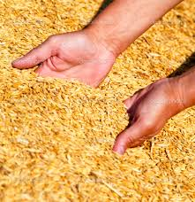 """""""Seed Gold,"""" what Kansas wheat farmers love to grow for wheat is very important to our lives"""