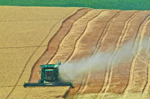 Birds-eye view of a farmer harvesting wheat