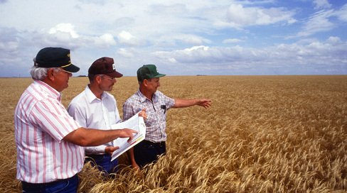 Inspecting the wheat crop
